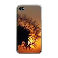 Dandelion Apple iPhone 4 Case (Clear)