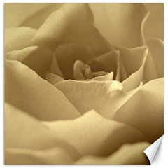 Rose  Canvas 16  x 16  (Unframed)