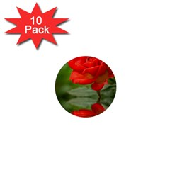 Rose 1  Mini Button (10 pack)