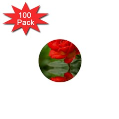 Rose 1  Mini Button (100 Pack)