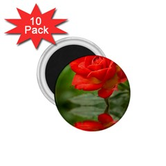 Rose 1 75  Button Magnet (10 Pack)