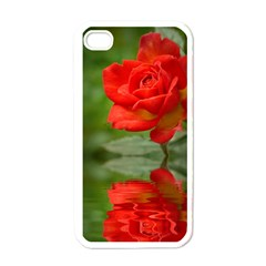 Rose Apple iPhone 4 Case (White)