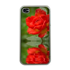 Rose Apple iPhone 4 Case (Clear)