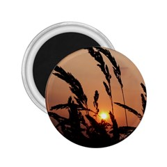 Sunset 2.25  Button Magnet