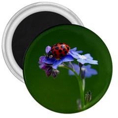 Good Luck 3  Button Magnet