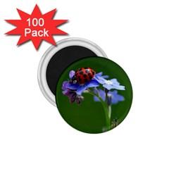 Good Luck 1 75  Button Magnet (100 Pack)