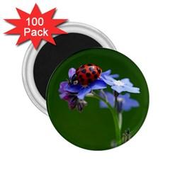 Good Luck 2 25  Button Magnet (100 Pack)