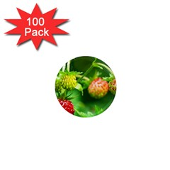 Strawberry  1  Mini Button Magnet (100 Pack)