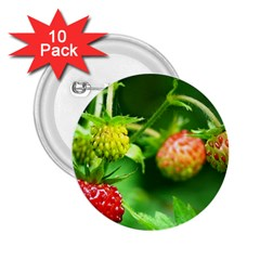 Strawberry  2 25  Button (10 Pack)