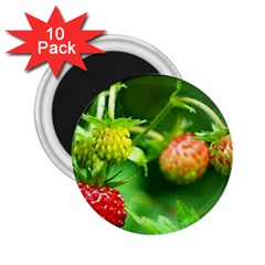 Strawberry  2.25  Button Magnet (10 pack)