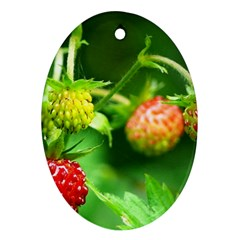 Strawberry  Oval Ornament (two Sides)