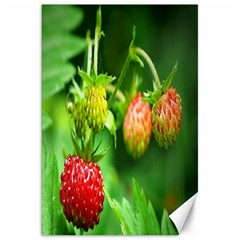 Strawberry  Canvas 20  x 30  (Unframed)