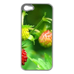 Strawberry  Apple iPhone 5 Case (Silver)
