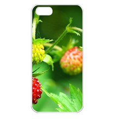 Strawberry  Apple Iphone 5 Seamless Case (white)