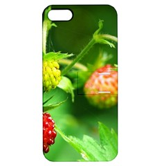 Strawberry  Apple iPhone 5 Hardshell Case with Stand