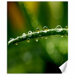 Waterdrops Canvas 8  x 10  (Unframed)