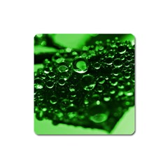 Waterdrops Magnet (Square)