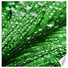 Waterdrops Canvas 16  X 16  (unframed)
