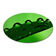 Waterdrops Magnet (oval)