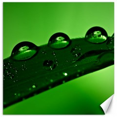 Waterdrops Canvas 20  x 20  (Unframed)