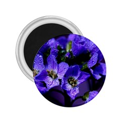 Cuckoo Flower 2.25  Button Magnet