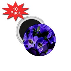 Cuckoo Flower 1.75  Button Magnet (10 pack)