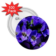 Cuckoo Flower 2 25  Button (100 Pack)