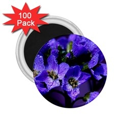 Cuckoo Flower 2 25  Button Magnet (100 Pack)