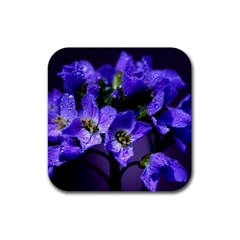 Cuckoo Flower Drink Coaster (Square)