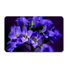 Cuckoo Flower Magnet (Rectangular)