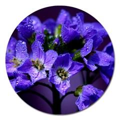Cuckoo Flower Magnet 5  (Round)