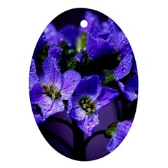 Cuckoo Flower Oval Ornament (two Sides)