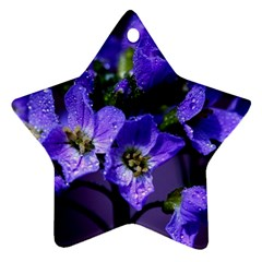 Cuckoo Flower Star Ornament (Two Sides)