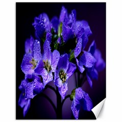 Cuckoo Flower Canvas 18  X 24  (unframed)