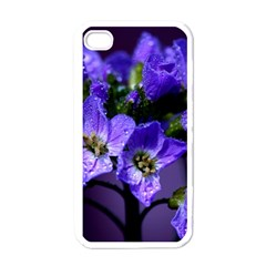 Cuckoo Flower Apple iPhone 4 Case (White)