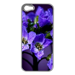 Cuckoo Flower Apple iPhone 5 Case (Silver)