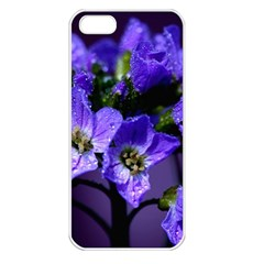 Cuckoo Flower Apple Iphone 5 Seamless Case (white)