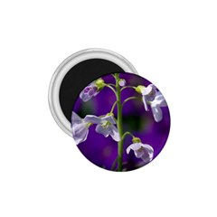 Cuckoo Flower 1 75  Button Magnet