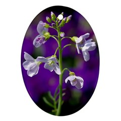 Cuckoo Flower Oval Ornament