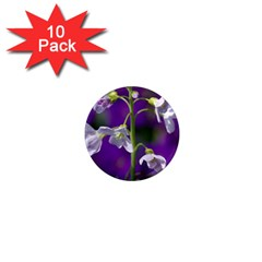Cuckoo Flower 1  Mini Button Magnet (10 pack)