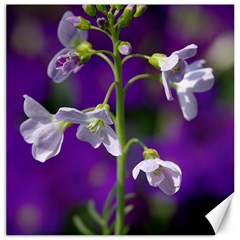 Cuckoo Flower Canvas 12  x 12  (Unframed)