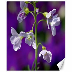Cuckoo Flower Canvas 20  x 24  (Unframed)
