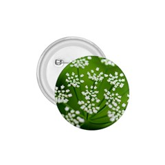 Queen Anne s Lace 1.75  Button