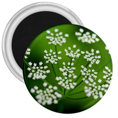 Queen Anne s Lace 3  Button Magnet
