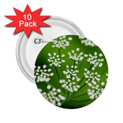 Queen Anne s Lace 2 25  Button (10 Pack)