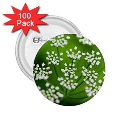 Queen Anne s Lace 2.25  Button (100 pack)