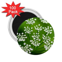 Queen Anne s Lace 2.25  Button Magnet (100 pack)