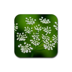 Queen Anne s Lace Drink Coasters 4 Pack (Square)