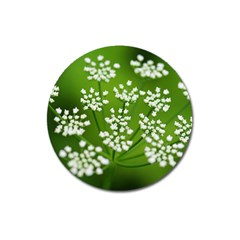 Queen Anne s Lace Magnet 3  (round)