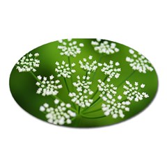 Queen Anne s Lace Magnet (Oval)